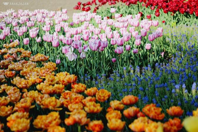 [JAPAN] Spring Memories at Showa Kinen Park – Tachikawa Tokyo