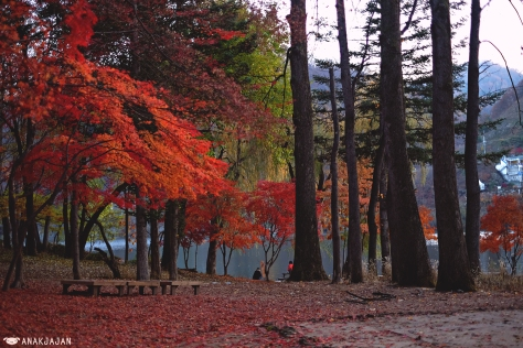 how to go to nami island guide