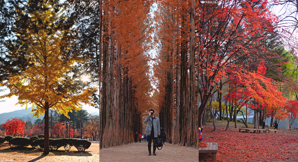 Nami Island And Petite France Tour