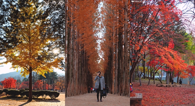 [KOREA] NAMI ISLAND (NAMISEOM) – Travel Guide