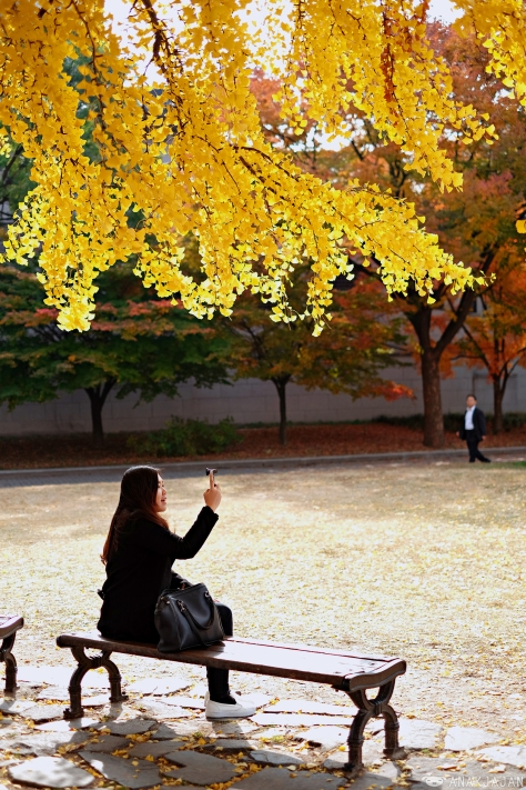 Korea Autumn In Seoul Places To Visit Travel Guide