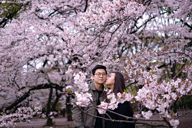 [JAPAN] CHERRY BLOSSOM (SAKURA) GUIDE – Best Spots in Tokyo
