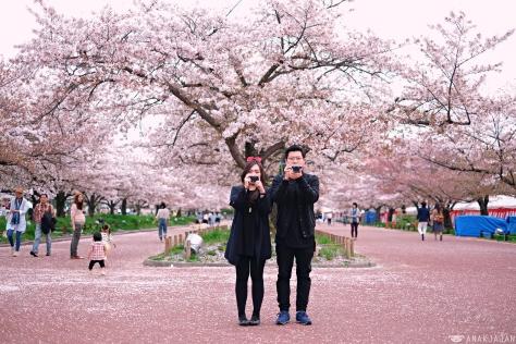Cherry Blossom In Japan Anakjajan Com
