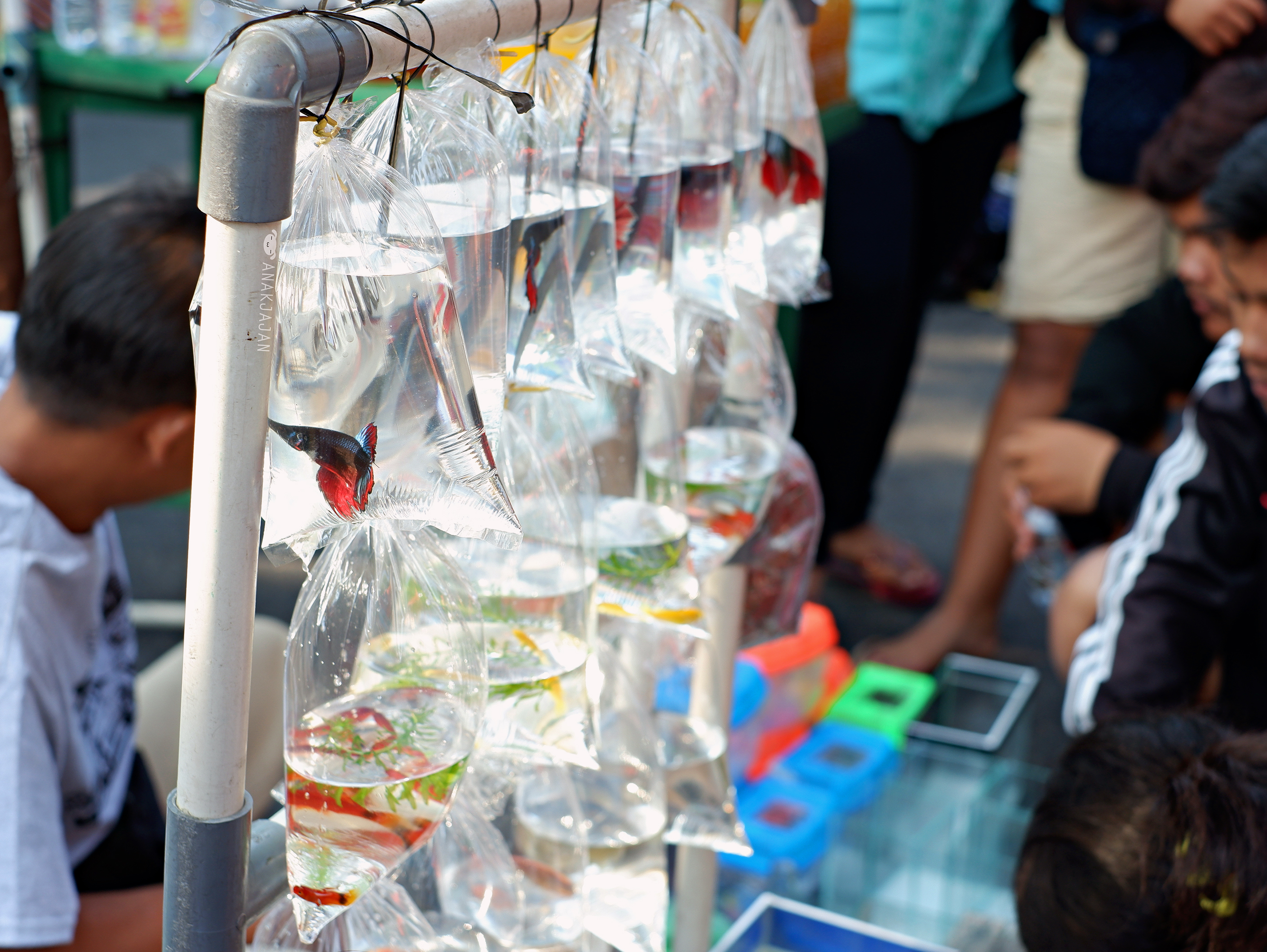 Pring Mas Soto Ayam Surabaya 30 Gr 6pcs Cek Harga Terkini Dan Lulur Sinangling Rm 25 Dscf7614