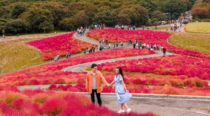[JAPAN] ITINERARY NAGOYA, SHIRAKAWA-GO, TAKAYAMA, IBARAKI, TOKYO (Part 2)
