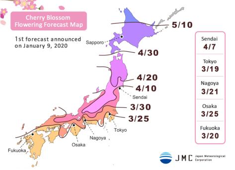Tokyo Cherry Blossom Season Anakjajan Com