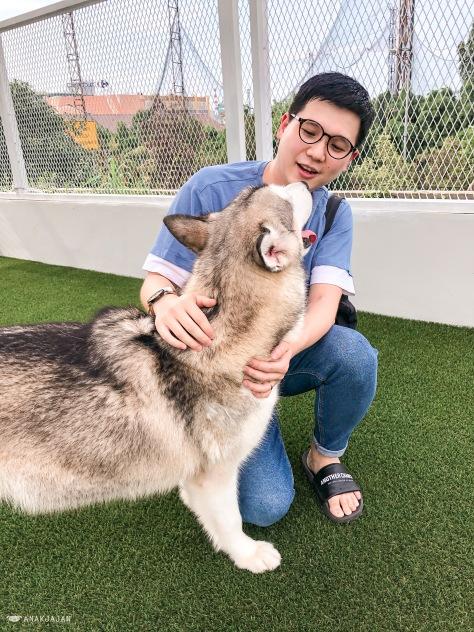 DOG MINISTRY (Dog Cafe, Hotel, Grooming, etc) - PLUIT ...